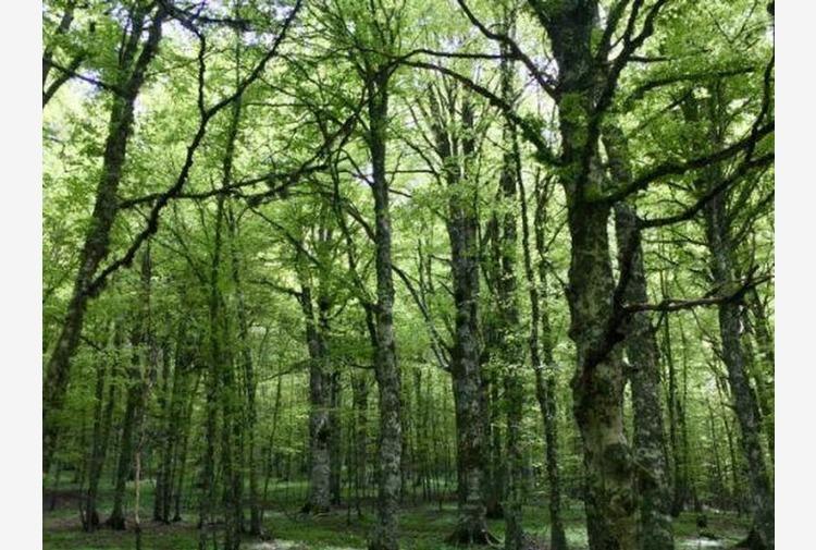 Rapporto Foreste Lombardia, costante crescita del bosco