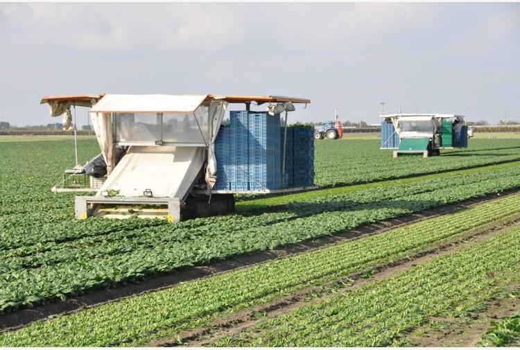 Sardegna, assessore Murgia convoca organizzazioni agricole