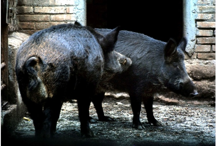 Liguria, approvata la VAS per la gestione della fauna selvatica