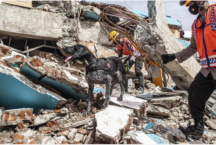 AI: competizione mondiale sulla previsione dei terremoti