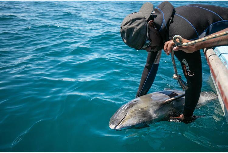 Mozambico: trovati cento delfini morti al largo della costa