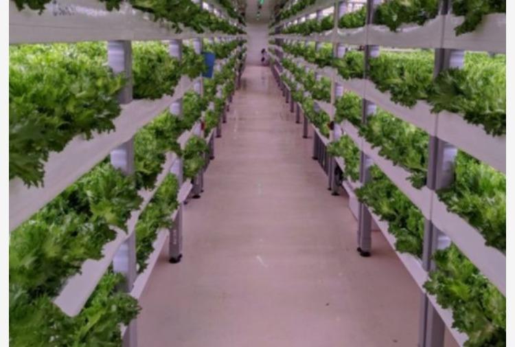 Accordo Enea-Fos per simulatore hi-tech coltivazioni al chiuso