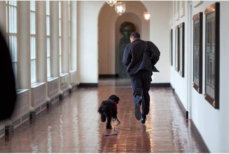 Obama annuncia morte cane Bo, 'vero amico e compagno fedele'