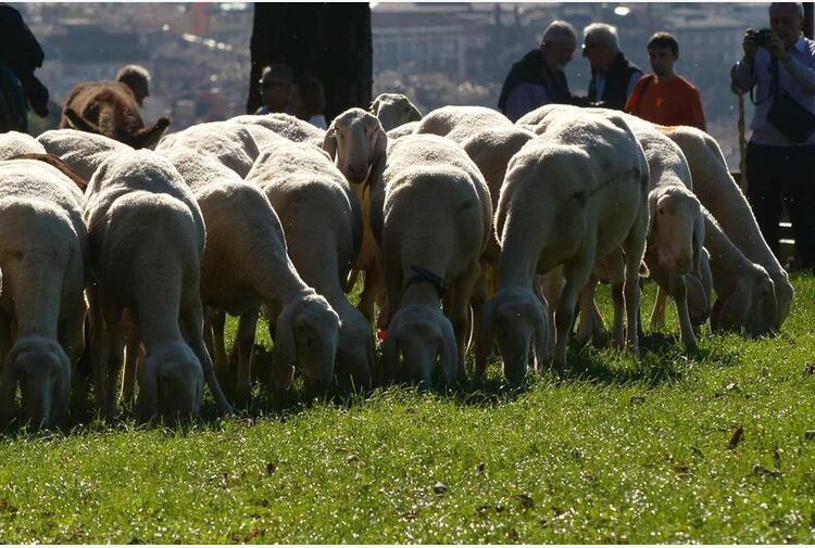 Ciambetti (Veneto): 'Preservare transumanza, è anche indotto economico'