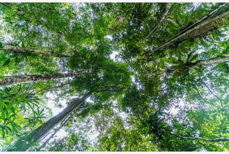 'Forests Forward', una nuova piattaforma per il cambiamento