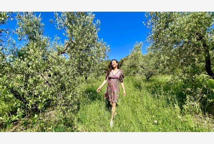 Olio extra vergine di oliva: i rischi di contraffazione e i metodi per difendersi