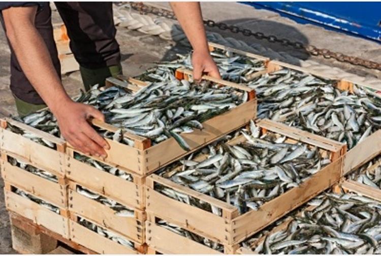 Pesce e sostenibilità, connubio difficile ma possibile