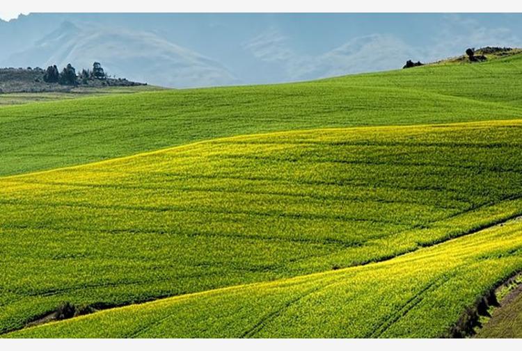 In Emilia Romagna agricoltura chiude 2020 con valore produzione 4,5 mld