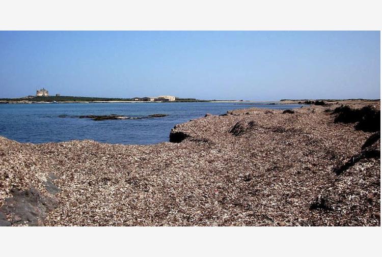 Posidonia: un ecosistema fondamentale per il mare