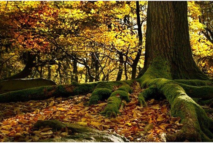 Covid, un positivo al raduno hippie al Mugello: scatta l'isolamento 'boschivo'
