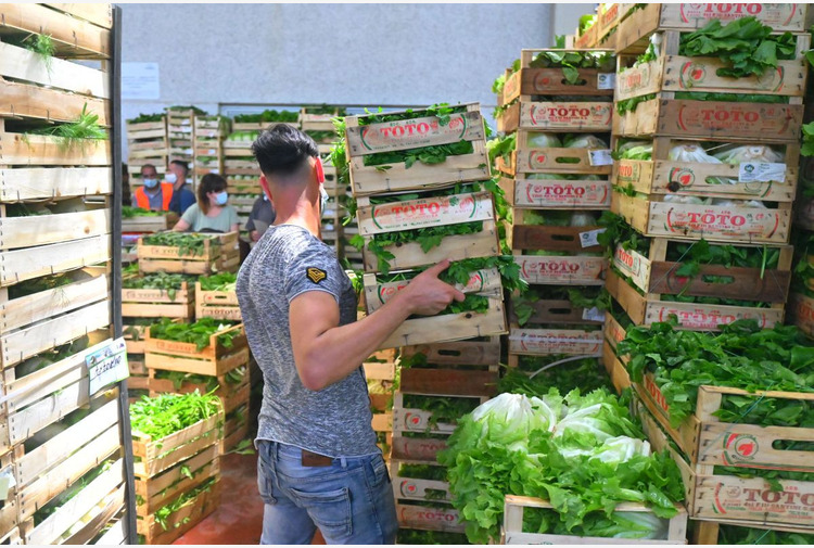 Basilicata, Fanelli '6 mln per rafforzamento filiere agroalimentari'