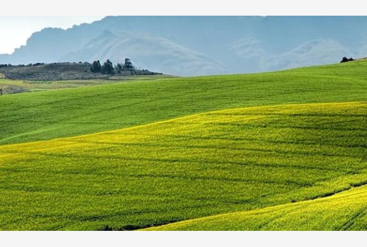 Quasi metà risorse toscane per agricoltura con finalità ambientali