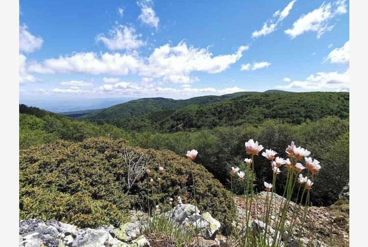 """L'appello delle Guide d'Aspromonte: """"Vogliamo un Ente Parco all'altezza"""""""