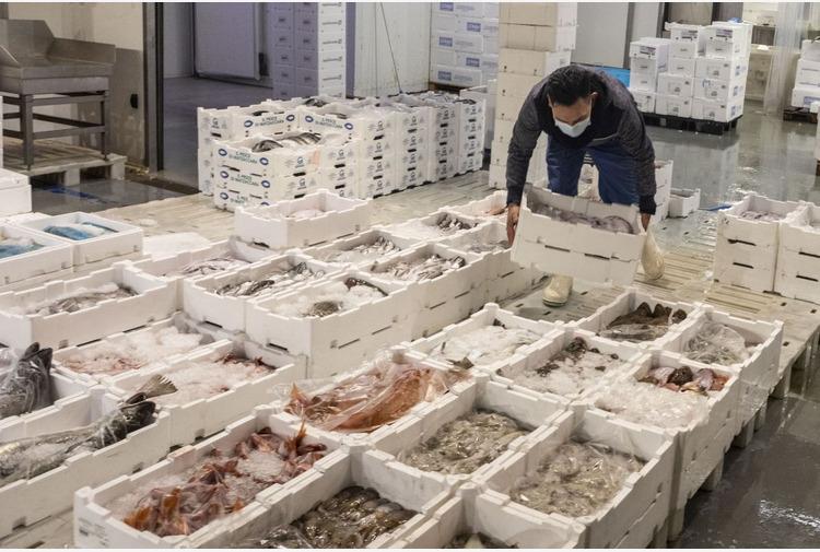 Oltre 11 milioni di Euro dal FEAMP per la pesca del Veneto