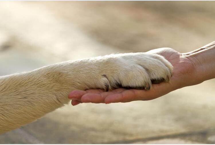 Animali: Bolla (Aisa), 'loro supporto a salute provato anche con patologie non evidenti'