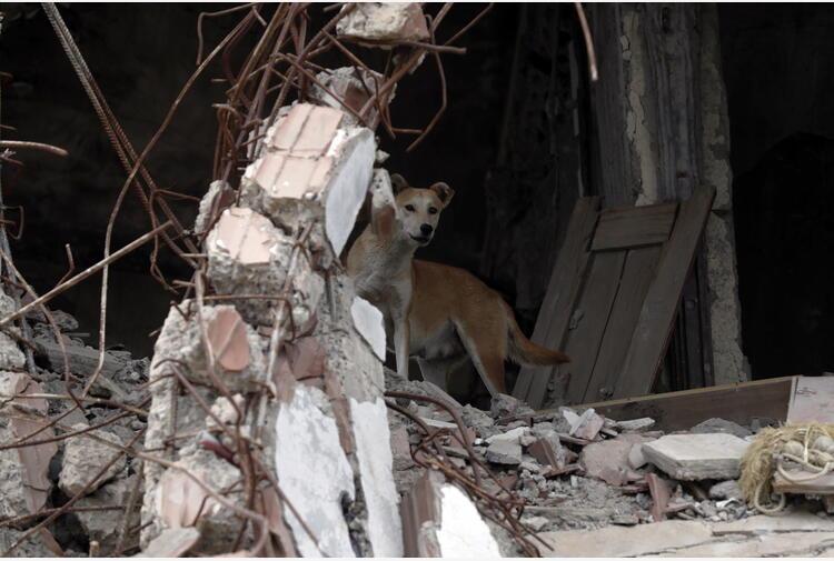 Yemen: Riad, uccisi oltre 150 ribelli Huthi